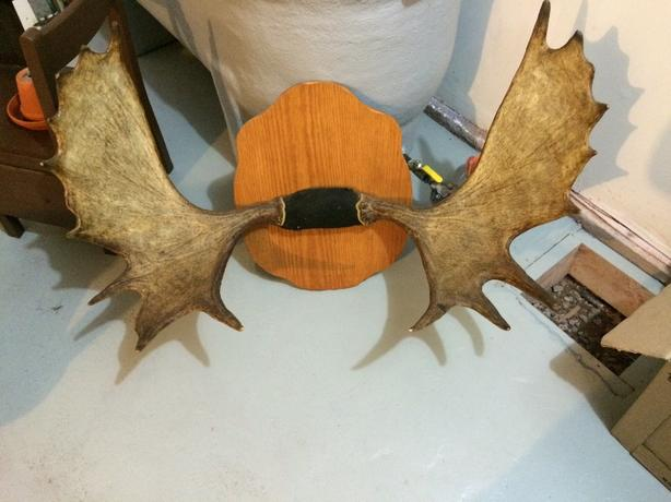 antlers mounted