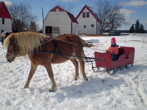 Sleigh and Harness